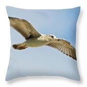 Wings Aloft Throw Pillow