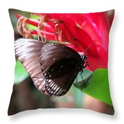 Wings Of Brown - Butterfly Throw Pillow