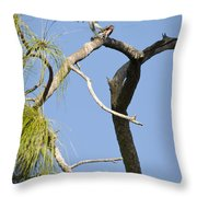 Wings Of The Raptor Throw Pillow