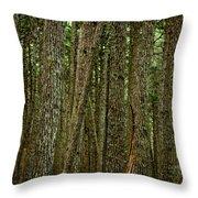 Winner Creek Trail Throw Pillow