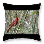 Winter Cardinal Sits On Tree Branch Throw Pillow