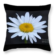 Winter Daisy Throw Pillow