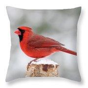 Winter Day Cardinal Throw Pillow