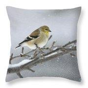 Winter Finch 2010 Throw Pillow