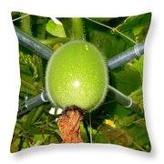 Winter Melon In Garden 1 Throw Pillow