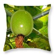 Winter Melon In Garden 2 Throw Pillow