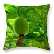 Winter Melon In Garden 3 Throw Pillow