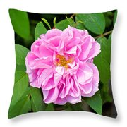 Winter Park Rose Throw Pillow
