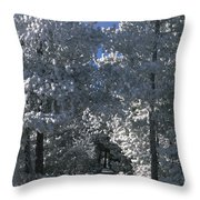 Winter Pathway Throw Pillow