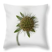 Winter Pincushion Plant Throw Pillow