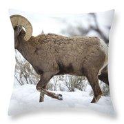 Winter Ram Throw Pillow