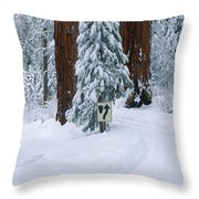 Winter Road Into Sequoia National Park Throw Pillow