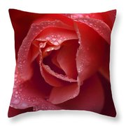 Winter Rose Two Throw Pillow