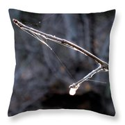 Winter Web. Throw Pillow