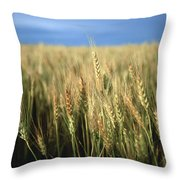 Winter Wheat In Linn, Kansas Throw Pillow