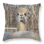 Winter White Alpaca Throw Pillow
