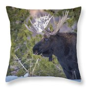 Winter's Arrival  Throw Pillow