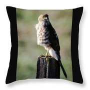 Wintery Cooper Throw Pillow