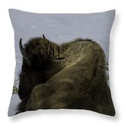 Wintry Slumber  Throw Pillow