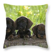 Wire-haired Dachshund Puppies Throw Pillow