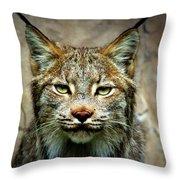 Wise Bob Cat Throw Pillow