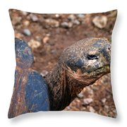 Wise Old Tortoise Throw Pillow