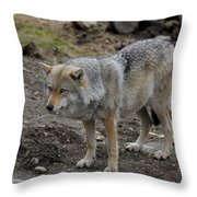 Wolf 1 Norway Throw Pillow