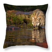 Wolf In Pond Throw Pillow
