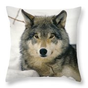 Wolf Rests In Snow Throw Pillow