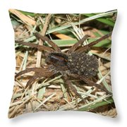 Wolf Spider With Babies Throw Pillow