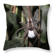 Wolf Spider With Egg Sac Throw Pillow