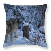 Wolf Wonderland Throw Pillow