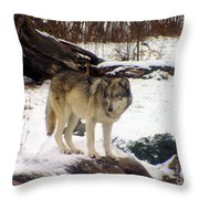 Wolfe In Winter Snow Throw Pillow