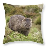 Wombat Tasmania #1 Throw Pillow