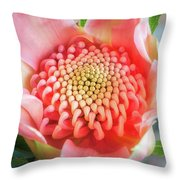 Wonderful Bright Pink Waratah Bud Throw Pillow