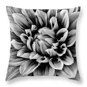 Wonderful Graphic Dahlia Throw Pillow