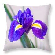 Wonderful Iris With Dew Throw Pillow