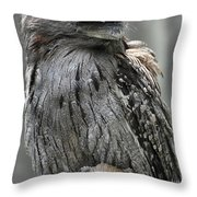 Wonderful Patterned Feathers On A Tawny Frogmouth Bird Throw Pillow