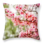 Wonderful Pink Cherry Blossoms At Floriade Throw Pillow