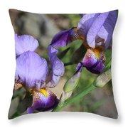 Wonderful Purple Irises Throw Pillow
