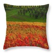 Wonderful Tuscany, Italy - 07  Throw Pillow