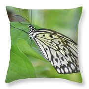 Wonderful Up Close Look At A Large Tree Nymph Butterfly Throw Pillow