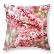 Wonderfully Delicate Pink Cherry Blossoms At Canberra's Floriade Throw Pillow