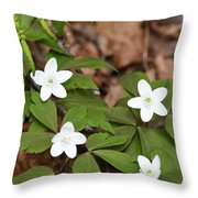 Wood Anemone Blooming Throw Pillow