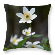 Wood Anemone  Throw Pillow