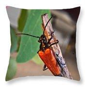 Wood Beetle Exploring Throw Pillow