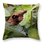 Wood Butterfly Throw Pillow