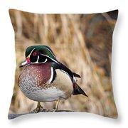 Wood Duck 3 Throw Pillow