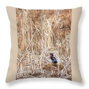 Wood Duck Drake 2 Throw Pillow