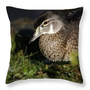 Wood Duck Female Throw Pillow